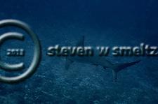 Scalloped Hammerhead Shark, Molokai Hawaii (Steven W SMeltzer)