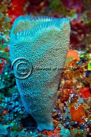 Azure Vase Sponge Babylon, Grand Cayman (Steven Smeltzer)