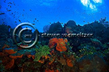 West Wall Ecosystem Orange Canyon Grand Cayman (Steven Smeltzer)