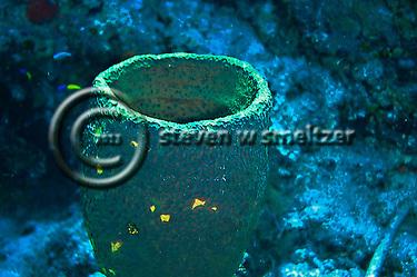 Green Vase Sponge Grand Cayman (Steven Smeltzer)