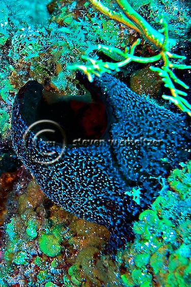 Black ball sponge, Little Tunnels, Grand Cayman (Steven Smeltzer)
